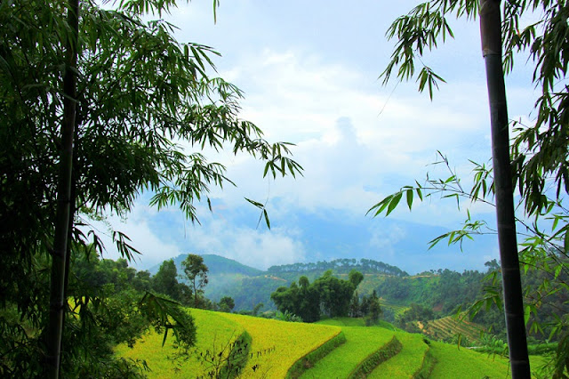 Cross the slope pass to Phung village to see the ripe rice paddies 3