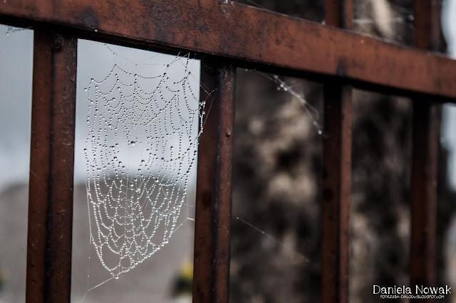 Pyskowicki artysta - pająk, który jest samoukiem.. Nie chodził do żadnej szkoły, a tworzy..