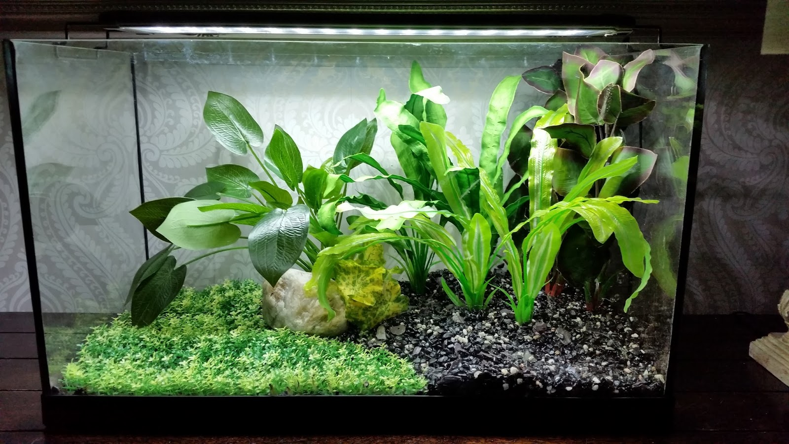 Hugo Kamishi   Zen Garden Aquarium Plants