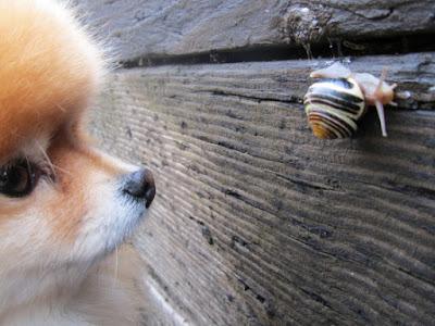 imagen de perro mirando un caracol
