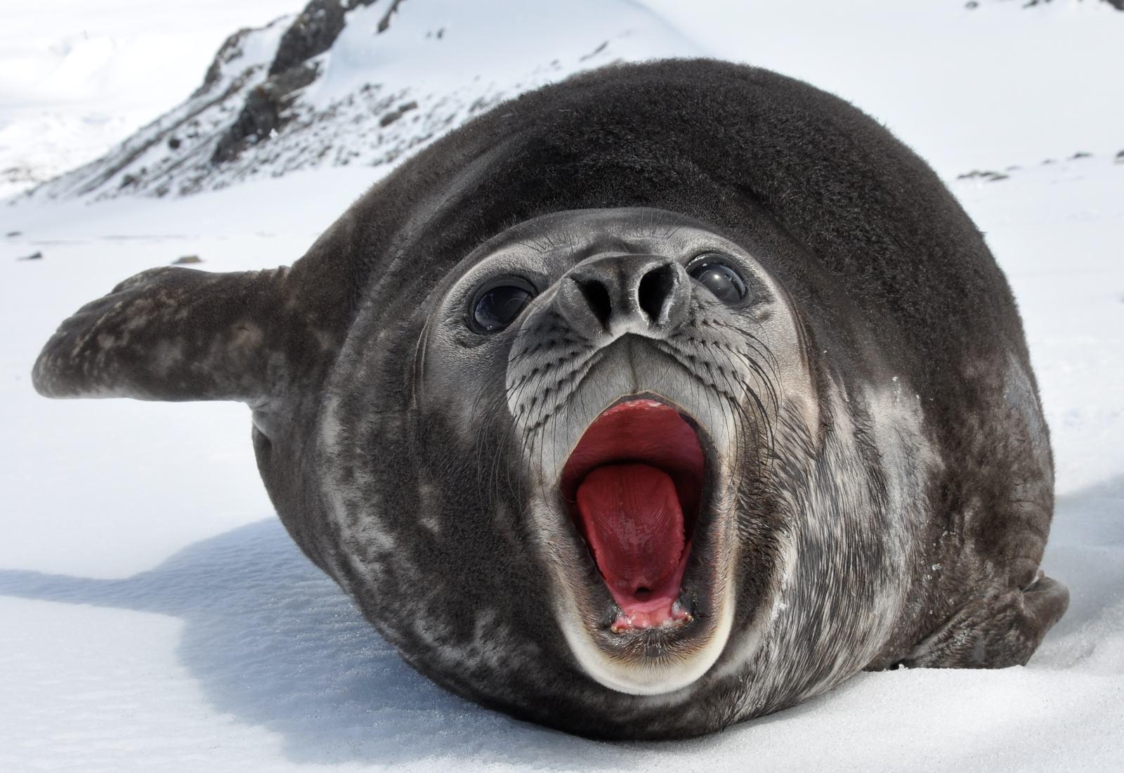 Fitness Girl Iphone Wallpaper Elephant Seals San Simeon Online News Icon