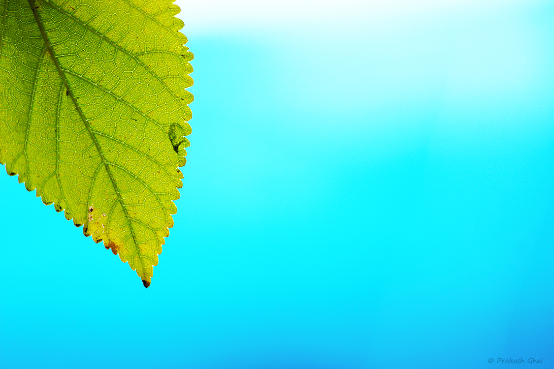 A minimalist photo of Green Leaf against a blue backdrop