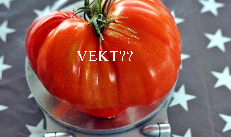 hvor mye veier en tomat