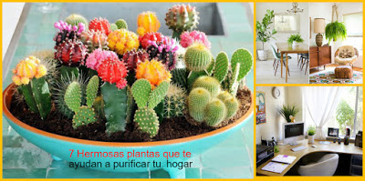 PLANTAS-QUE-AYUDAN-A-PURIFICAR-HOGAR