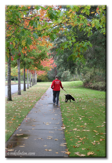 Man and his dog walking in Washington