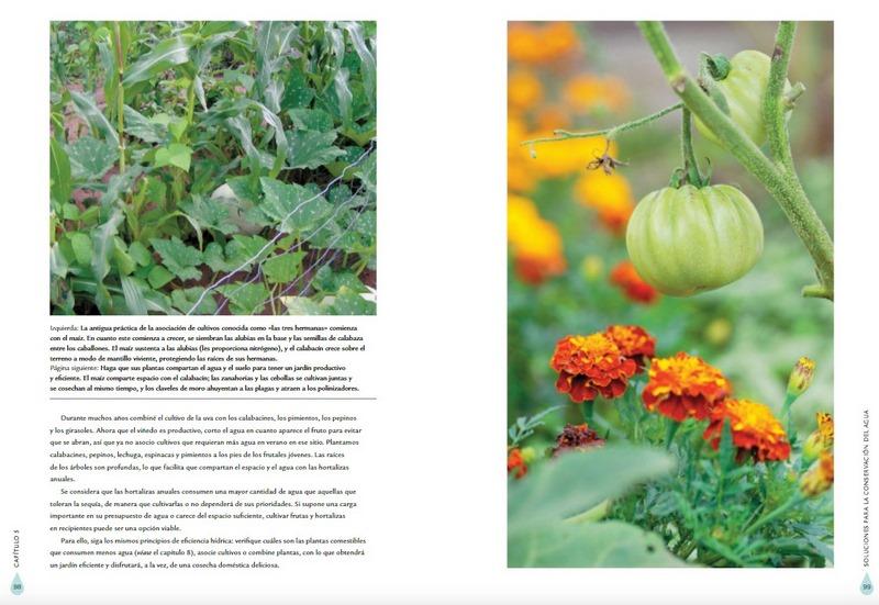 Plantas y uso eficiente del agua en el jardín