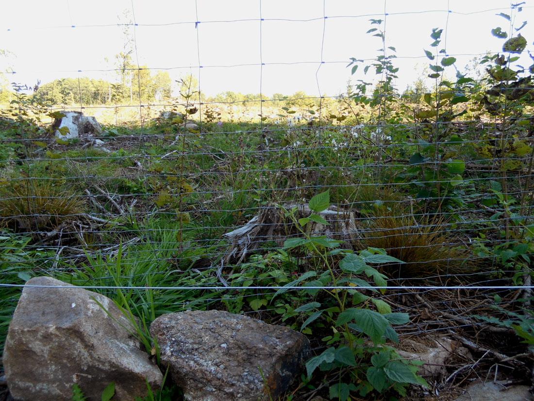 Recinto in piantagione di latifoglie nobili