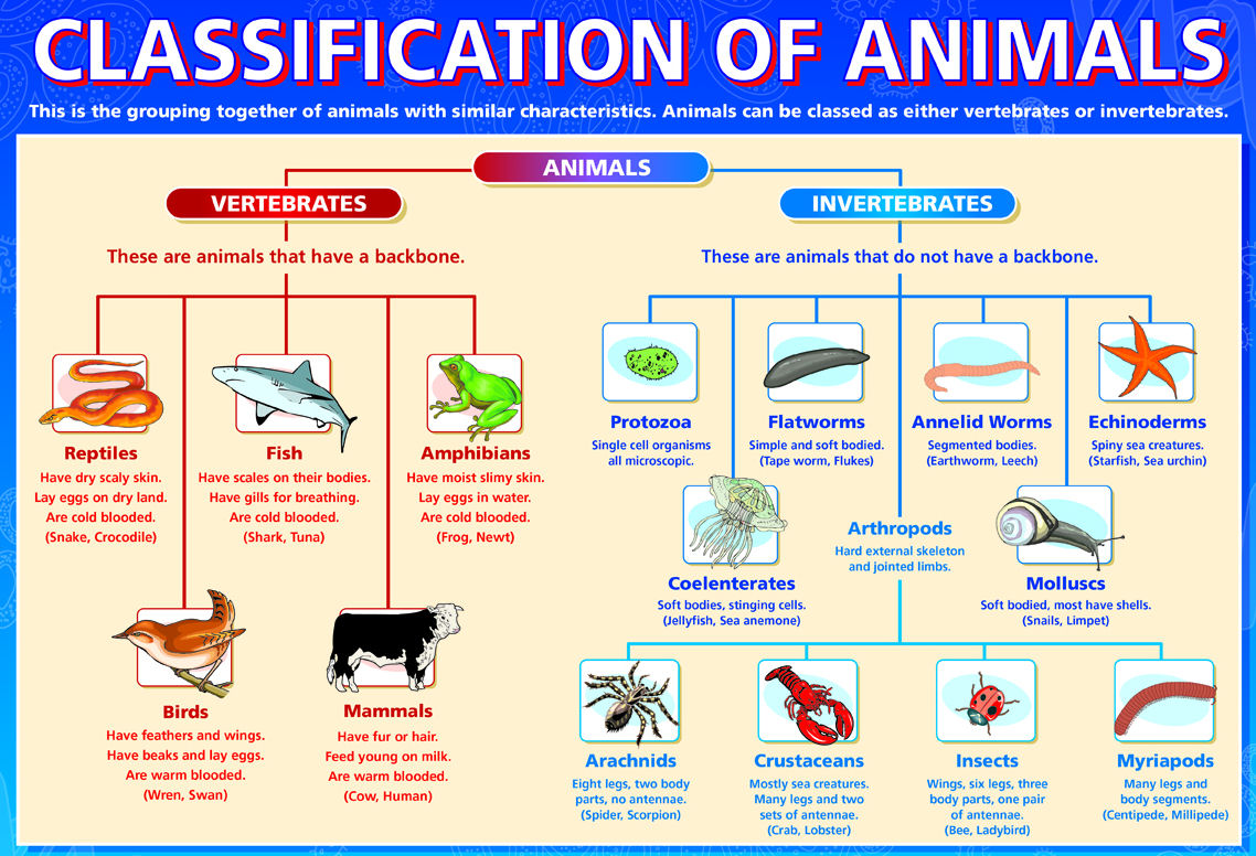 Animalia Taxonomy Worksheet