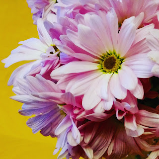 Bouquet of daisies, daisy, flower bouquet, flowers