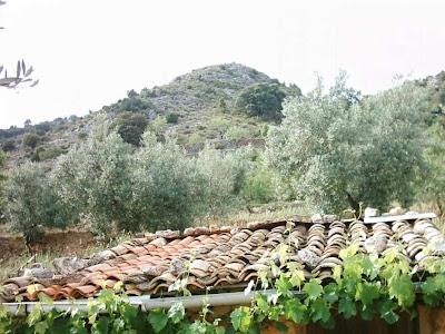 La pileta, camino, pantano de Pena, embalse, finca, almendros, olivos 5