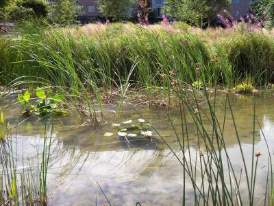 spiritual awakening signs, spiritual awakening, spiritual awakening symptoms, pond, grass, nature