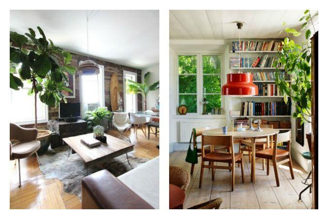Plantas de interior de gran tamaño en salones
