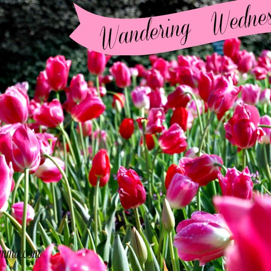 Wandering Wednesday~Dallas Arboretum