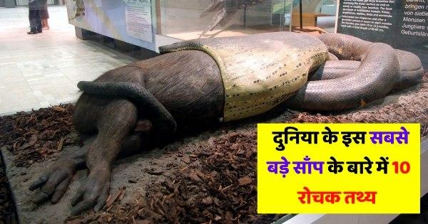 Duniya ka sabse bada saap green anaconda in Senckenberg Museum