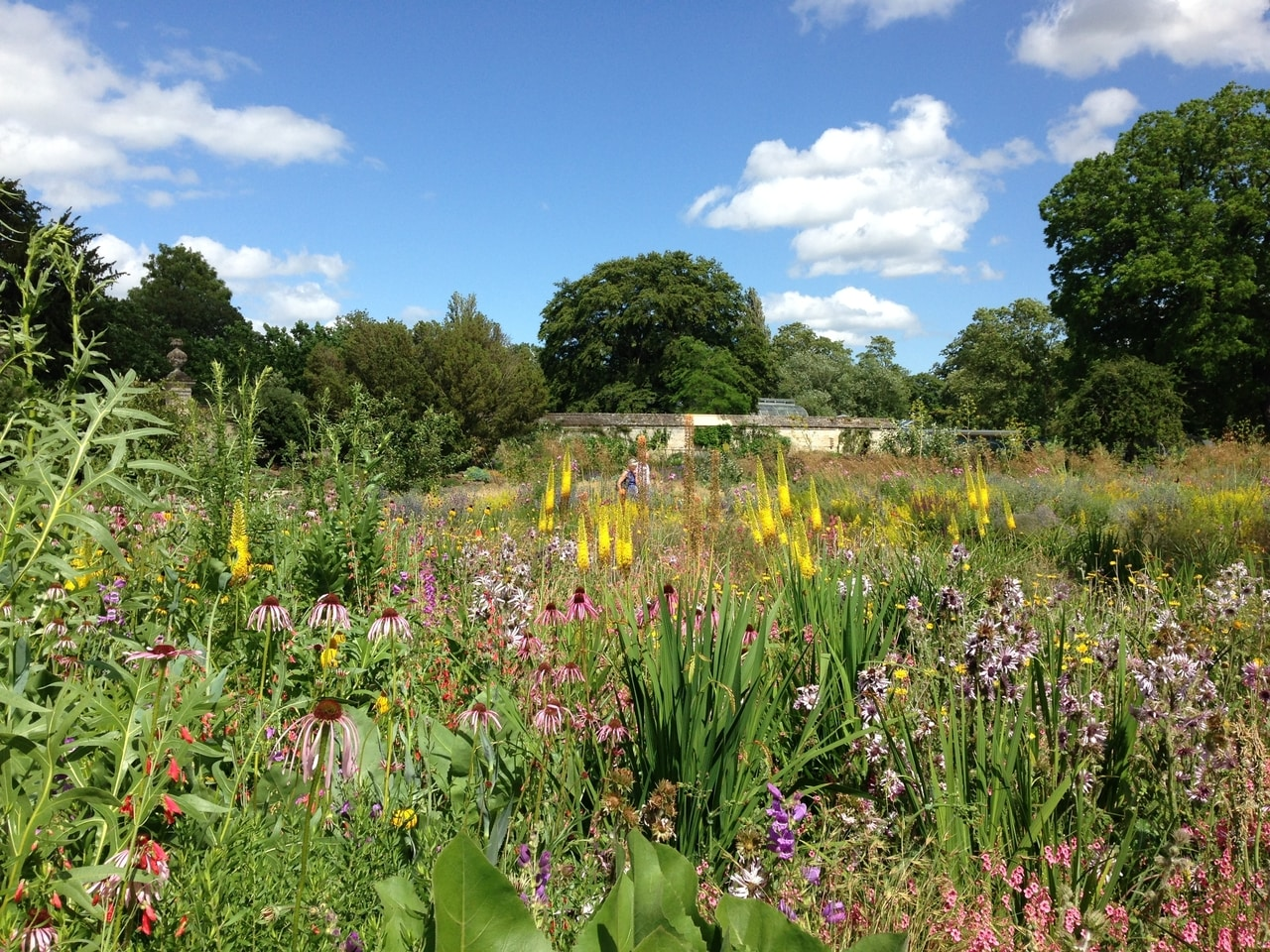 James Hitchmough's meadow at the University of Oxford Botanic garden in full bloom in July 2015