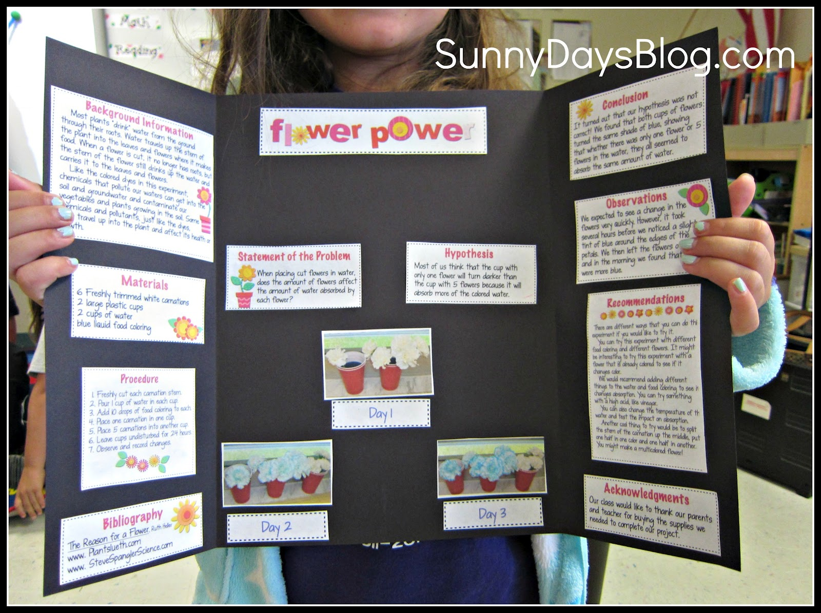 Science fair made easy and free sunny days in second for Do my project