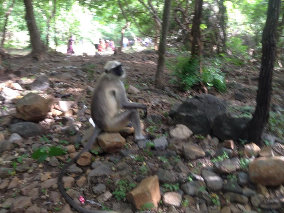 close up monkey image