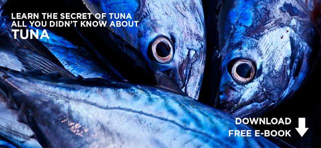Mackerel Fish Supplier, Indonesian Mackerel Supplier