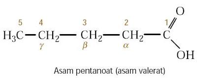 Asam pentanoat (asam valerat)
