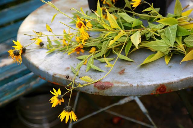 Jerusalem artichoke flowers sunchoke flowers