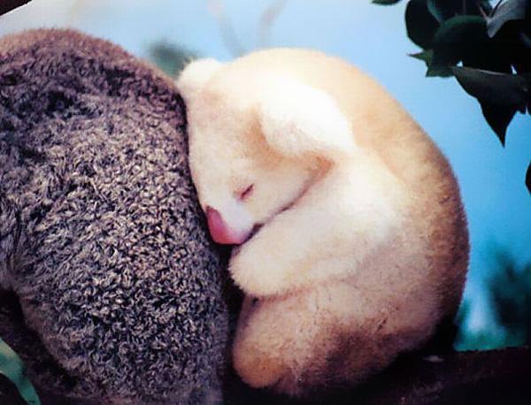 Những cậu út đáng yêu nhất trong các gia đình động vật