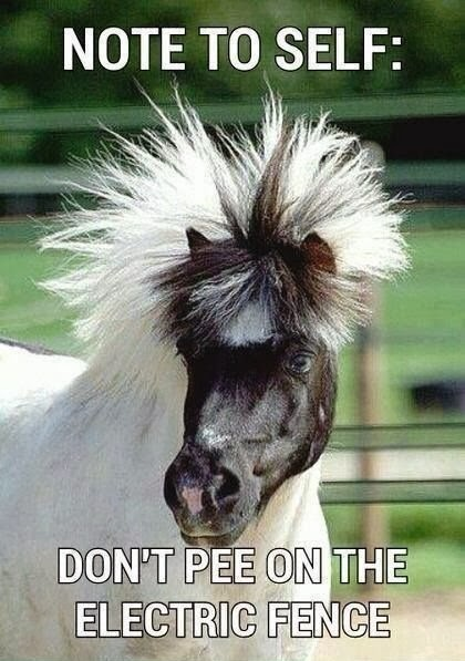 Funny Horse Joke Meme Caption Image - Note to self: don't pee on the electric fence