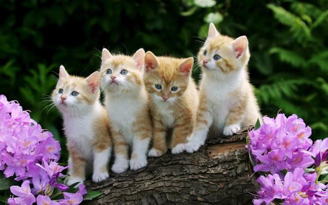 mèo kute dễ thương
