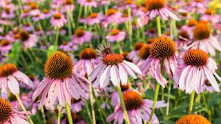 Veld met zomerbloemen