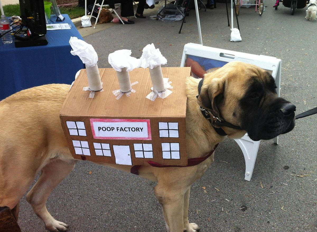 50 Funny pet costumes (50 pics) | Amazing Creatures