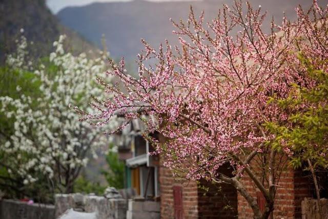 Hà Giang được xem là địa đầu của Tổ Quốc với vẻ đẹp thiên nhiên hoang sơ, hùng vĩ, rất thơ mộng đặc biệt là vào mùa xuân. Nơi đây vẫn giữ được những nét đẹp hoang sơ nhất, chân thật nhất của thiên nhiên vì chưa bị khai thác du lịch, và các dịch vụ nghỉ dưỡng nhiều.