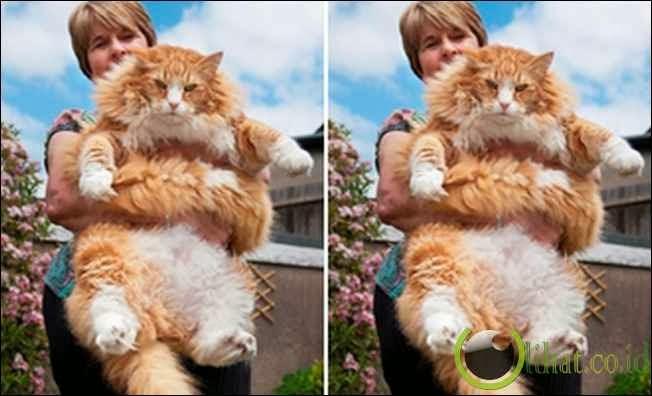 Ulric: Kucing 13 Kg