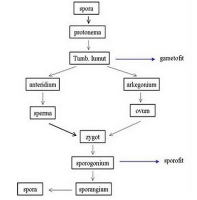 Analisis Bentuk Badan Endomorf