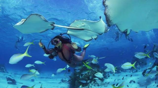 Keindahan Panorama Bawah Laut Pantai Nunuhu Morotai