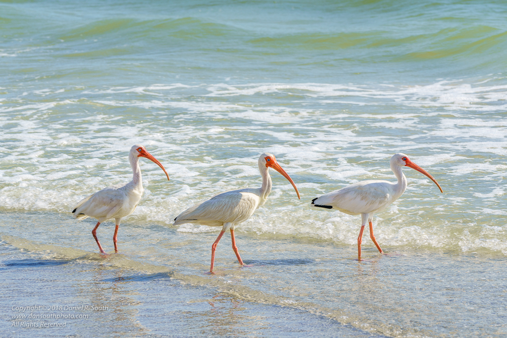 a photo of Sea Birds Hunting On The Florida Coast