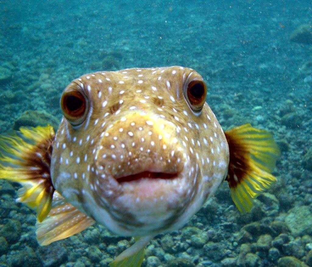 Жизнь рыбок - великое творение