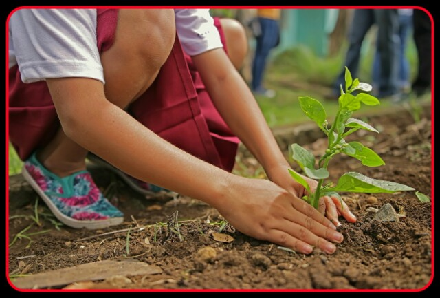 Tree Plantaion,Young Girl,Hand,leg,tree, nature,student