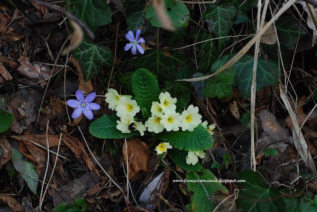 wiosenne kwiaty we Włoszech