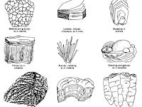 Pengertian Mineral, Klasifikasi Mineral dan Sifat-sifat Fisik Mineral : Warna, Kilap (luster), Kekerasan (hardness), Cerat (streak), Belahan (cleavage), Pecahan (fracture), Struktur/bentuk kristal, Berat Jenis, Sifat Dalam (tenacity), Kemagnetan.