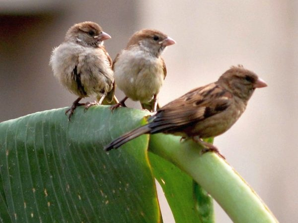 World-sparrow-Day-2018