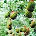 El Clima Extremo Causa Estragos En La Agricultura De Israel