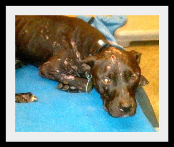 Lucky Dog Rescue Blog: Chance the Bait Dog