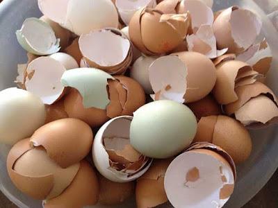 Usos de la cáscara de huevo