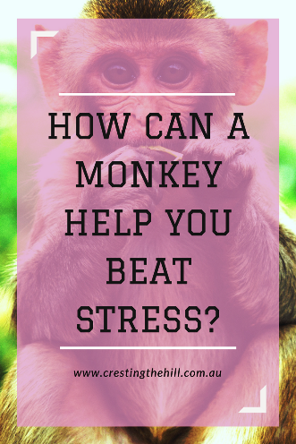 "How the simple sentence ""don't pick up the monkey"" changed my stress levels"