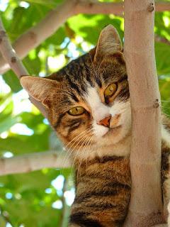 Kucing Untuk Dijual Johor Bahru Kucing Untuk Dijual