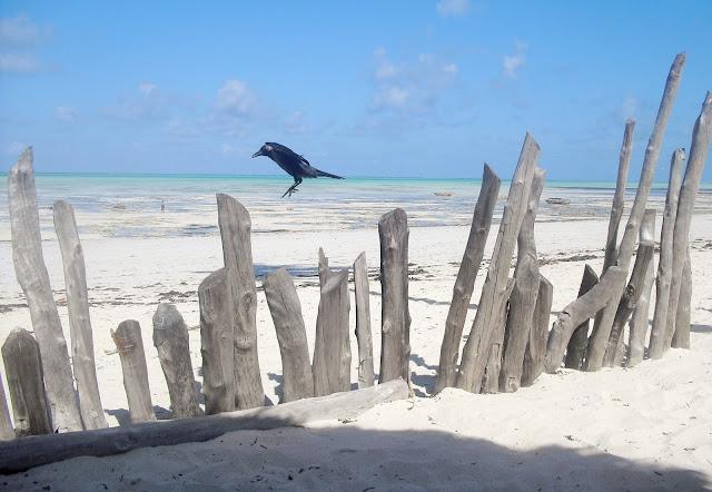 corvo spiaggia palizzata