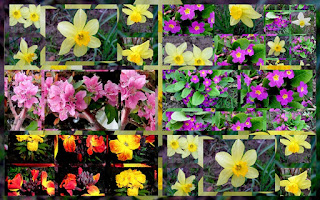 spring flowers colorful photo collage