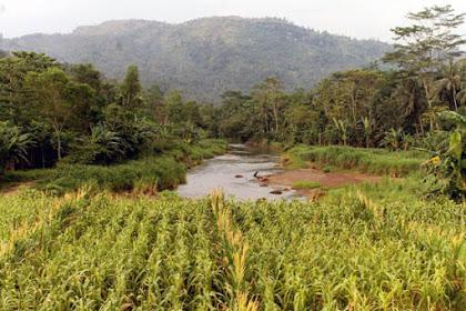 Alam yang Terusik Proyek Penambangan Emas di Trenggalek (1)