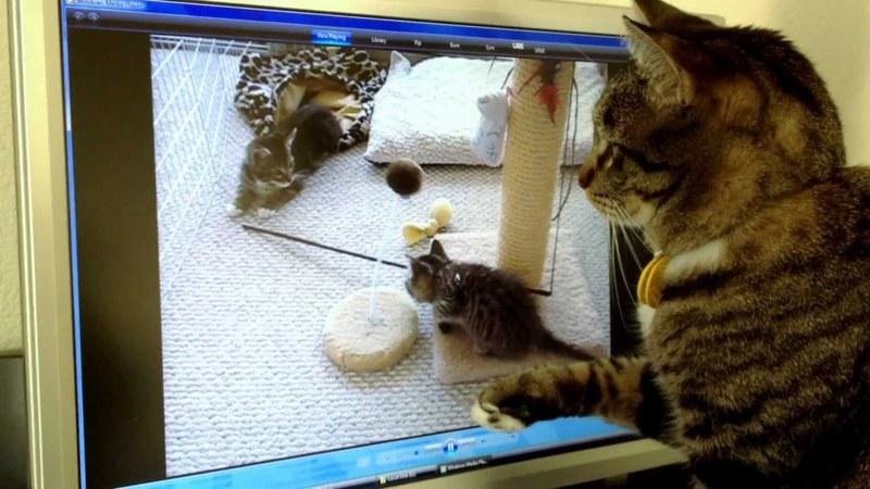Μα που πήγαν τα γατάκια μου; (βίντεο)