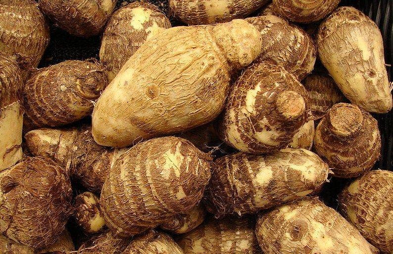Công dụng và một số món ăn chế biến từ khoai sọ