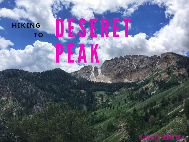 Hiking to Deseret Peak, Utah's Ultra Prominence Peaks, Hiking in Utah with Dogs